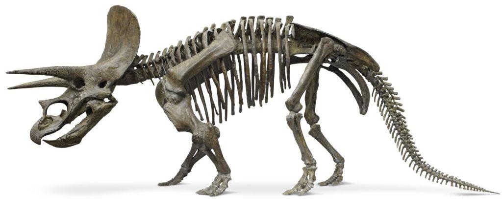 Triceratops_full_side_on2_u8qdmy